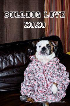 14Jan15 Fenway - Bulldog Love