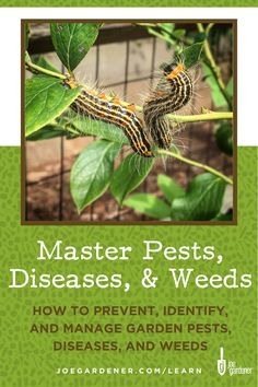 How to prevent, identify and manage garden pests, plant diseases and weeds. Gardening Courses, Gardening Tips, Garden Weeds, Plant Diseases, The Weather Channel, Good Morning America, Grow Your Own Food, The Way You Are, Green Life