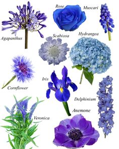 Flower names by Color   Gardening   Wedding flowers ...