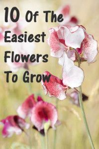 10 Of the easiest flowers to grow. Includes lots of pictures