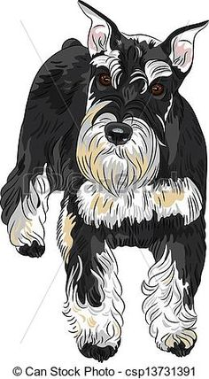 Vector - Vector dog breed Miniature Schnauzer black and silver color - stock illustration, royalty free illustrations, stock clip art icon, stock clipart icons, logo, line art, EPS picture, pictures, graphic, graphics, drawing, drawings, vector image, artwork, EPS vector art
