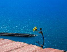 "Check out new work on my @Behance portfolio: ""Ilha de Capri - Itália"" http://be.net/gallery/53218681/Ilha-de-Capri-Italia"