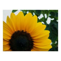 Planting Sunflowers, Sunflower Garden, Nature Posters, Body Is A Temple, Mellow Yellow, Custom Posters, Custom Framing, Create, Artwork