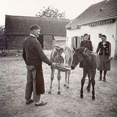 A jószág volt az aranya a népnek. Old Pictures, Old Photos, Vintage Farm, Budapest Hungary, Farm Life, Historical Photos, Folklore, Equestrian, The Past