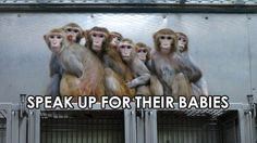 It's not the monkeys who need their heads examined.