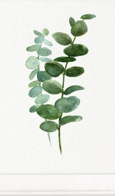 A delicate silver dollar eucalyptus leaves watercolour print - perfect for any room. Printed on heavyweight fine art watercolour paper. DETAILS + x Frame not included Watercolor Leaves, Watercolor Print, Watercolor Paintings, Botanical Illustration, Botanical Prints, Plant Art, Painting Inspiration, Wallpaper Backgrounds, Wallpapers