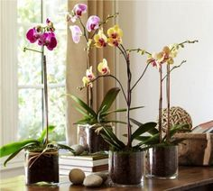 Live Phalaenopsis Orchid In Glass Vase Wedding Flowers….potted Live Phalaenopsis Orchid In Glass Vase Wedding Flowers…. Country Wedding Flowers, Rustic Wedding Flowers, Flower Bouquet Wedding, Orchid Pot, Orchid Plants, Plante Carnivore, Very Beautiful Flowers, Beautiful Live, Orchid Centerpieces