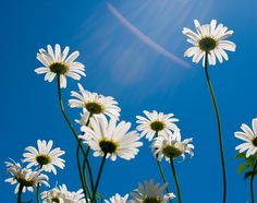 Skyward by De eL on 500px
