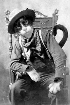 Если бы человек мог быть скрещен с котом, это улучшило бы человека, но ухудшило бы кота.