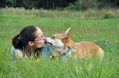 welsh corgi pembroke ( Monty): sweet kiss :-*