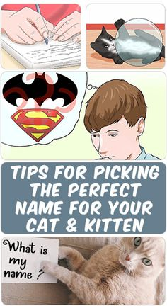 Deciding what name you're going to name your cat or kitten usually isn't that easy and simple. Sometimes personal preference typically play a task when selecting a name for your cat or kitten. Choosing a cat or kitten name isn't harder than choosing a name for dogs or puppies...  Learn how to come up with a cool name for your cats following the steps throw this PIN ....