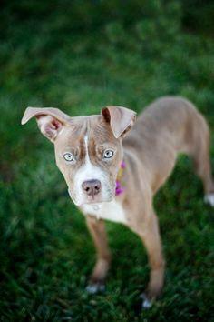Shelter Dog Photography .Kaelyn Ryan