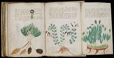 """The Voynich manuscript, described as """"the world's most mysterious manuscript"""", is a work which dates to the early 15th century."""
