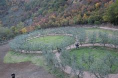 Bosco di San Francesco, Assisi