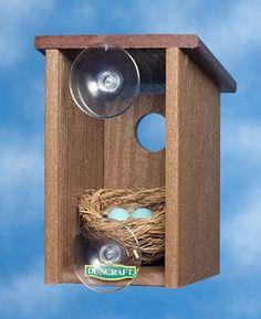 Bird house on window so you can watch!