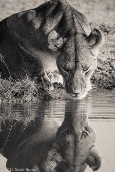 Africa | 'African Safari'. Tanzania © Dave Burns
