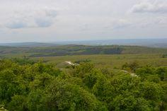 Budakeszi erdő