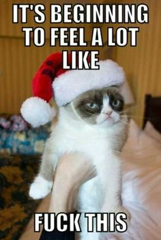 Do you love Grumpy cat. If you do, These Grumpy cat Memes work for you.These Grumpy cat Memes work are so funny and humor.Read This Top 23 Grumpy Cat Memes Wor Grumpy Cat Quotes, Grumpy Cat Humor, Cat Jokes, Cats Humor, Angry Cat Memes, Funny Cats, Funny Animals, Cute Animals, Funniest Animals