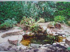 small interesting pond