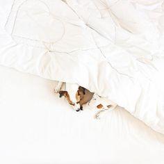 dog イヌ 犬可愛い画像まとめ http://ift.tt/1V6hJ6V