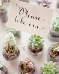 Potted Plant Wedding Favors | More mini potted plants (succulents) as wedding favo... / wedding ...