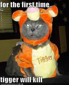 funny halloween cartoons 2 - Funny Cat Halloween