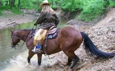 What makes a good Trail Horse/ MSAR Horse?  Simple at home Training Tips for both...