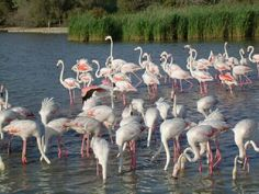 Pink Flamingos in France #travel