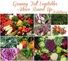 Fall Vegetable Garden Inspiration Round Up