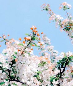 Pretty pink blossoms | Pink trees | Flower Power | Floral Love | Flora