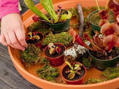 How to care for insectivorous plants