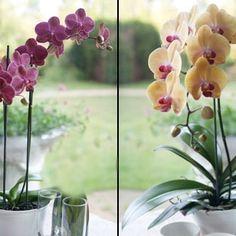 Как обрезать орхидею пос…