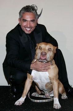 cesar's dog daddy   Poze Cesar Millan