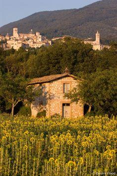 Looking up at Assisi, Italy - a wonderfully spiritual walled city