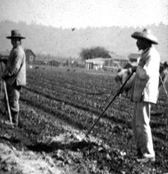 Chinese farm laborers working in the strawberries north of Watsonville in the 1870s. The Chinese were the most important agricultural laborers in the region in the 19th century, and Santa Cruz and Watsonville fought bitterly over their presence. Watsonville saw them as being necessary to the economy of the Pajaro Valley, while Santa Cruz became the epicenter of the regional anti-Chinese move