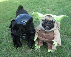 Cutest dogs in Star-Wars costumes :3