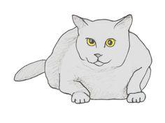 Illustration Katze Karthaeuser