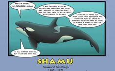 Infographic that reveals the horrific history of SeaWorld's captive whales.
