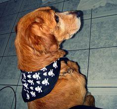 Cão do Rock