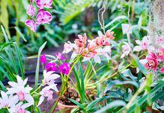 Fotografia de orquídia