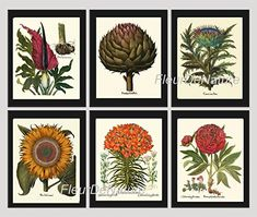 Botanical Set of 6 Prints Antique Beautiful Large Artichoke Yellow Sunflower Lily Red Peony Plants Flowers Illustration Home Room Decor Wall Art Unframed