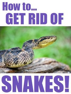 1000 Ideas About Snake Repellant On Pinterest Keep Snakes Away Plants That Repel Mosquitoes