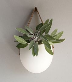 Air Plant Hanger- Mudpuppy  I have wonder tin ceilings that I do not want to drill into, this is a wonderful alternative for hanging plants.