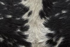 Animal hides are preserved by tanning.
