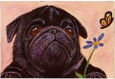 "Adorable Pug Pup, Paco by Mary Detwiler Oil Pastel ~ 5"" x 7"""