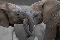Animal magic animals funny elephant, elephant pictures и ani Funny Elephant, Elephant Love, Elephant Walk, Baby Animals, Funny Animals, Cute Animals, Animal Magic, My Animal, Elephant Pictures