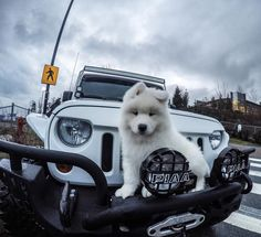 #dog #JEEP
