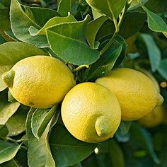 Tips for using lemons to cleanse the lymph, tomatoes to burn body fat, coconut oil to banish sugar cravings, and more at Self-help Health!
