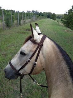 Dr Cooks bitless bridle.  brown nylon.  horse/cob size.  on ebay