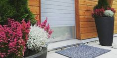 Tuija, kellokanerva ja hopealanka - Thuja, Erica and Calocephalus Autumn Flowers, Fall Plants, Garden, Fall Flowers, Garten, Outdoor Fall Flowers, Lawn And Garden, Gardens, Gardening